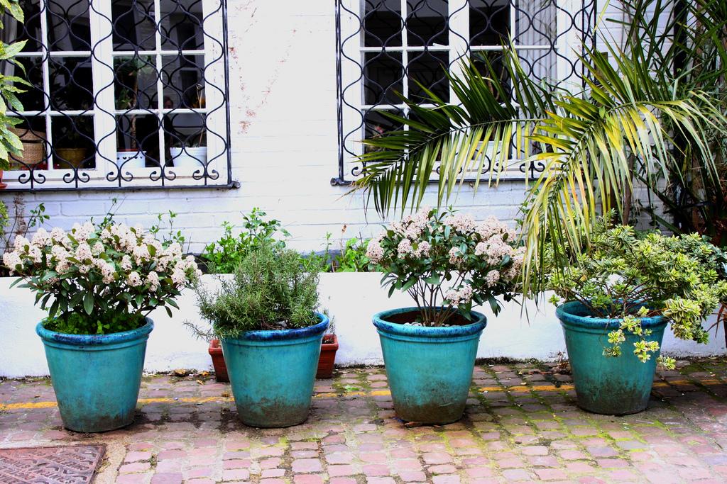 Sentirsi a casa nel mondo via che si va - Giardini curati ...