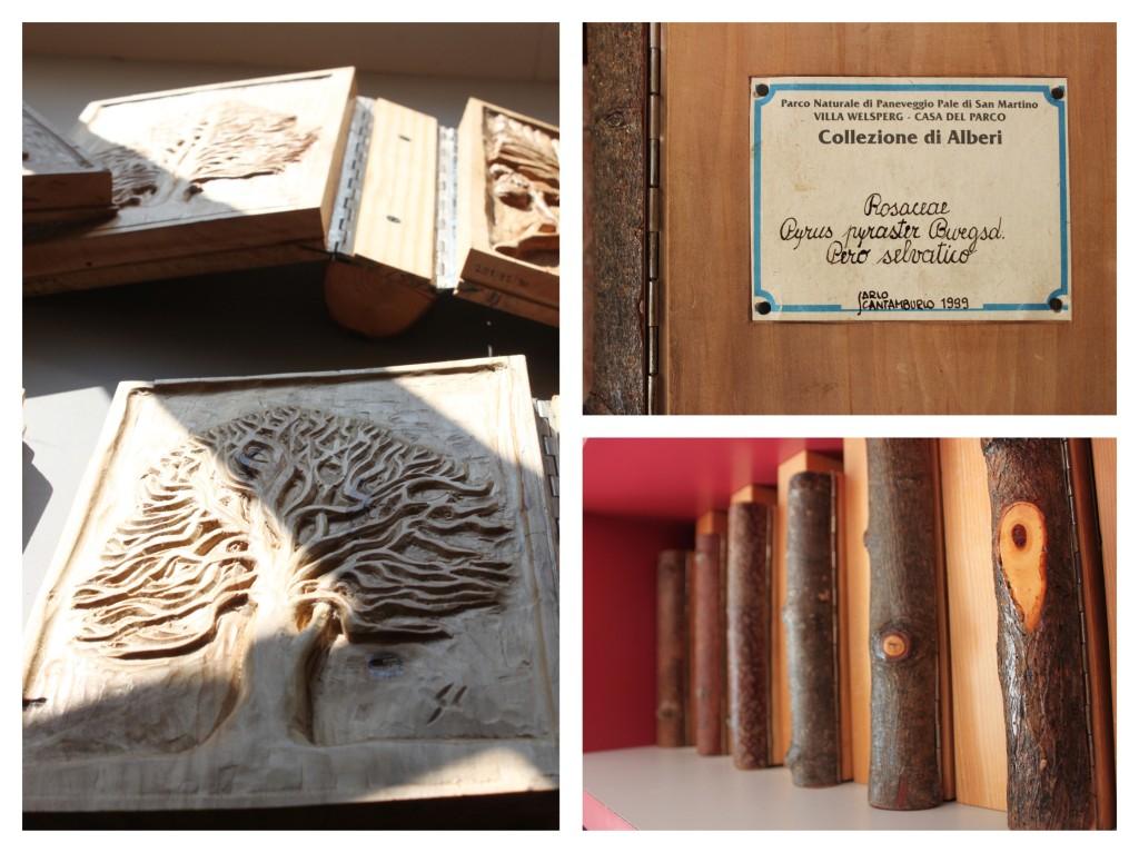xiloteca, biblioteca del legno