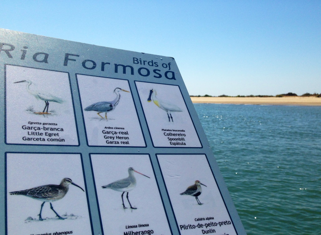 Bird watching a Ria Formosa