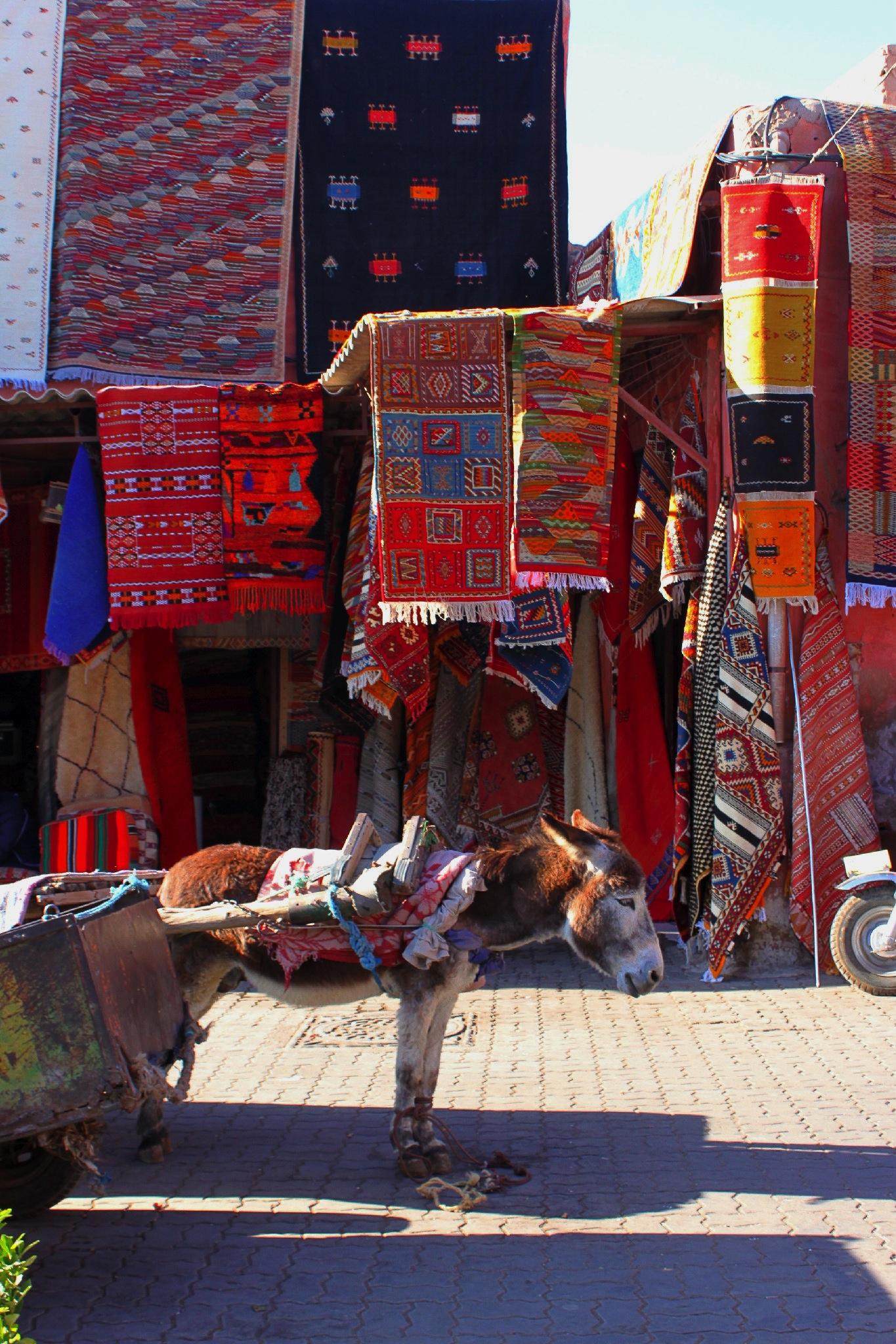 Asinello, da solo, in una piazza del souk