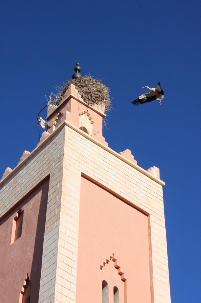 Su ogni minareto c'è un nido di cicogna