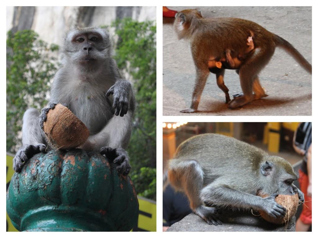 scimmie alle batu caves