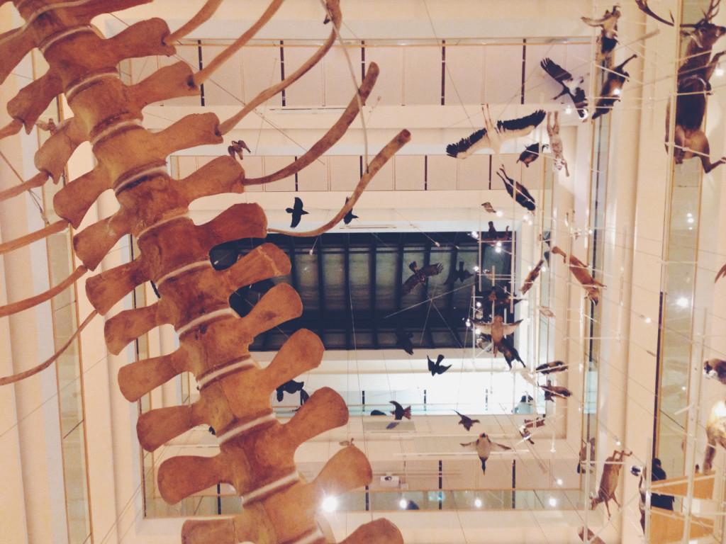 lo scheletro del muse