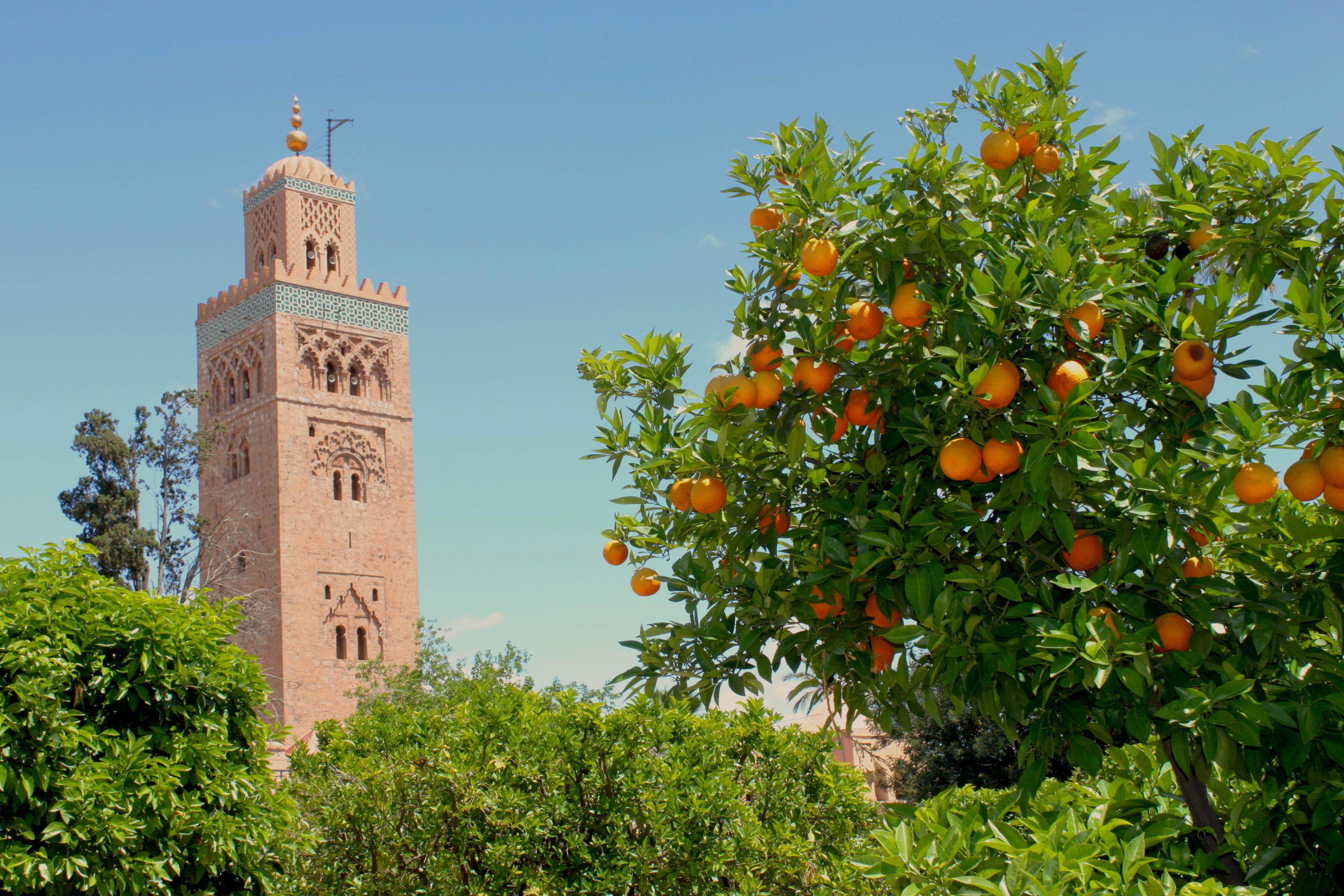 Marrakech, la Koutoubia e gli aranci