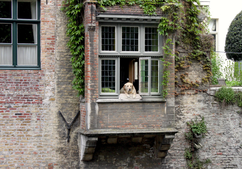 Il cane alla finestra