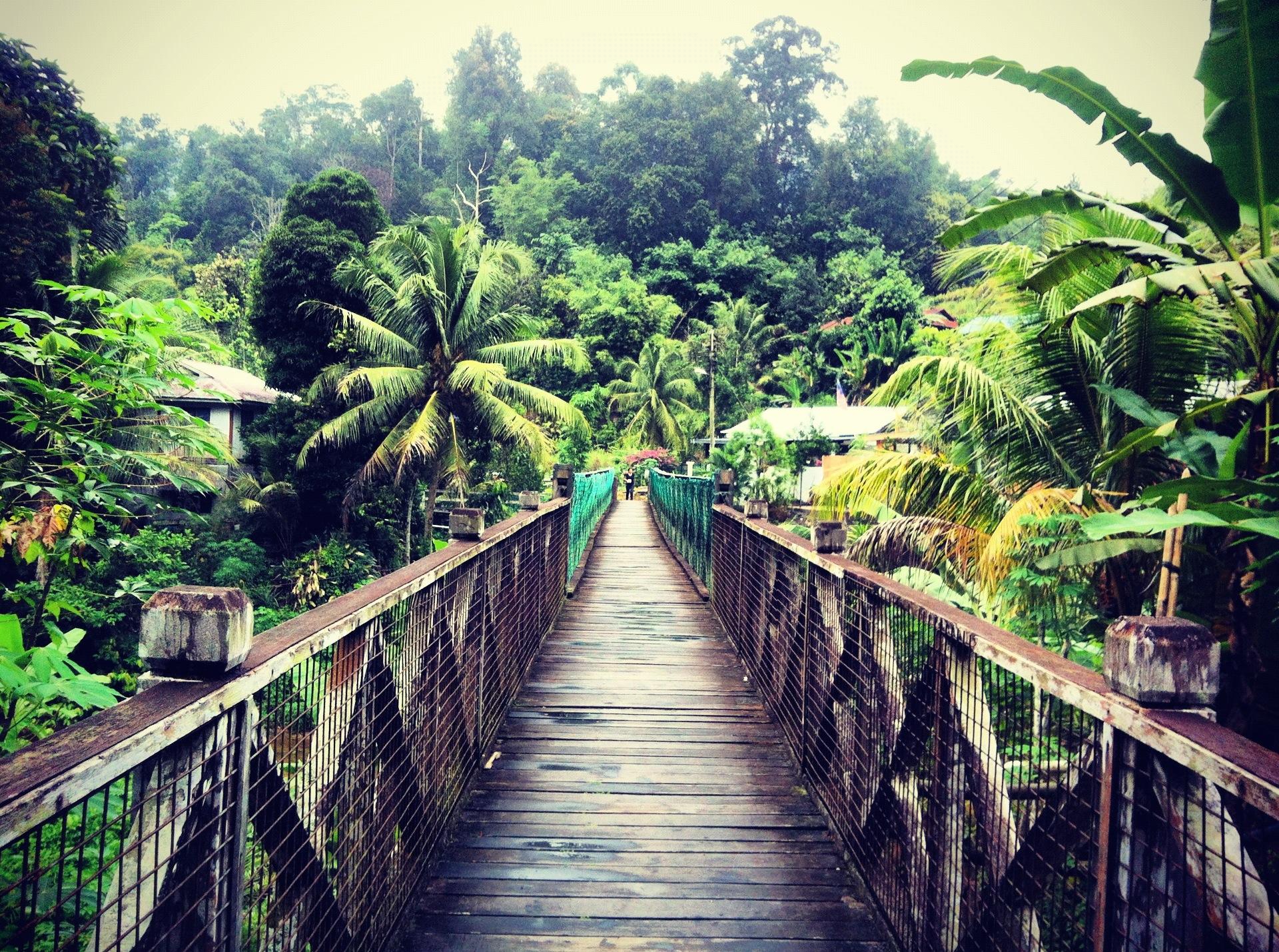 ponte sospeso nella giungla del borneo