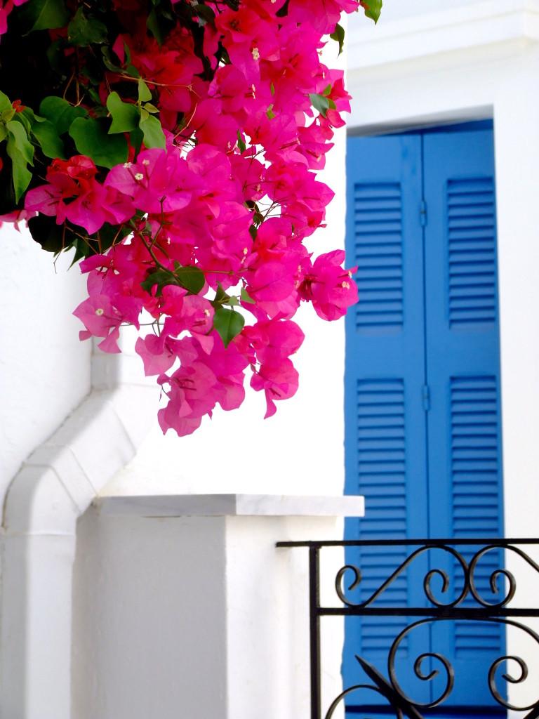 E poi ogni tanto, tra tutto il bianco e l'azzurro, c'è un rosa così intenso da sembrare vivo