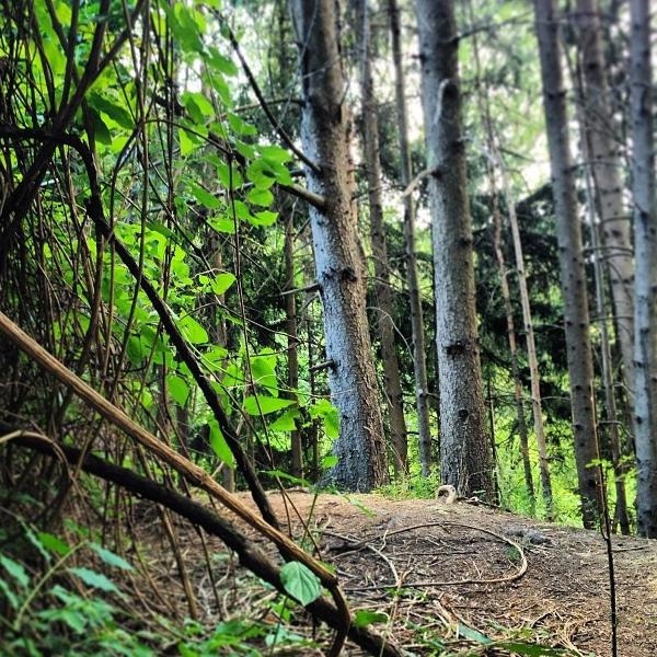 Guida pratica alla scelta della piazzola in campeggio - Parte 1