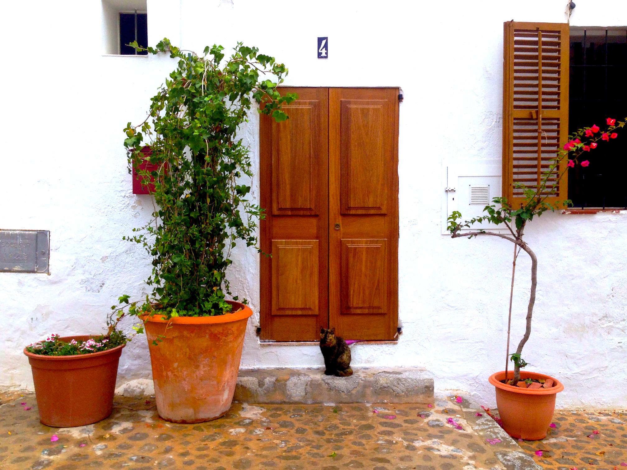 La tenerezza del micino che aspetta il suo padrone davanti alla porta di casa