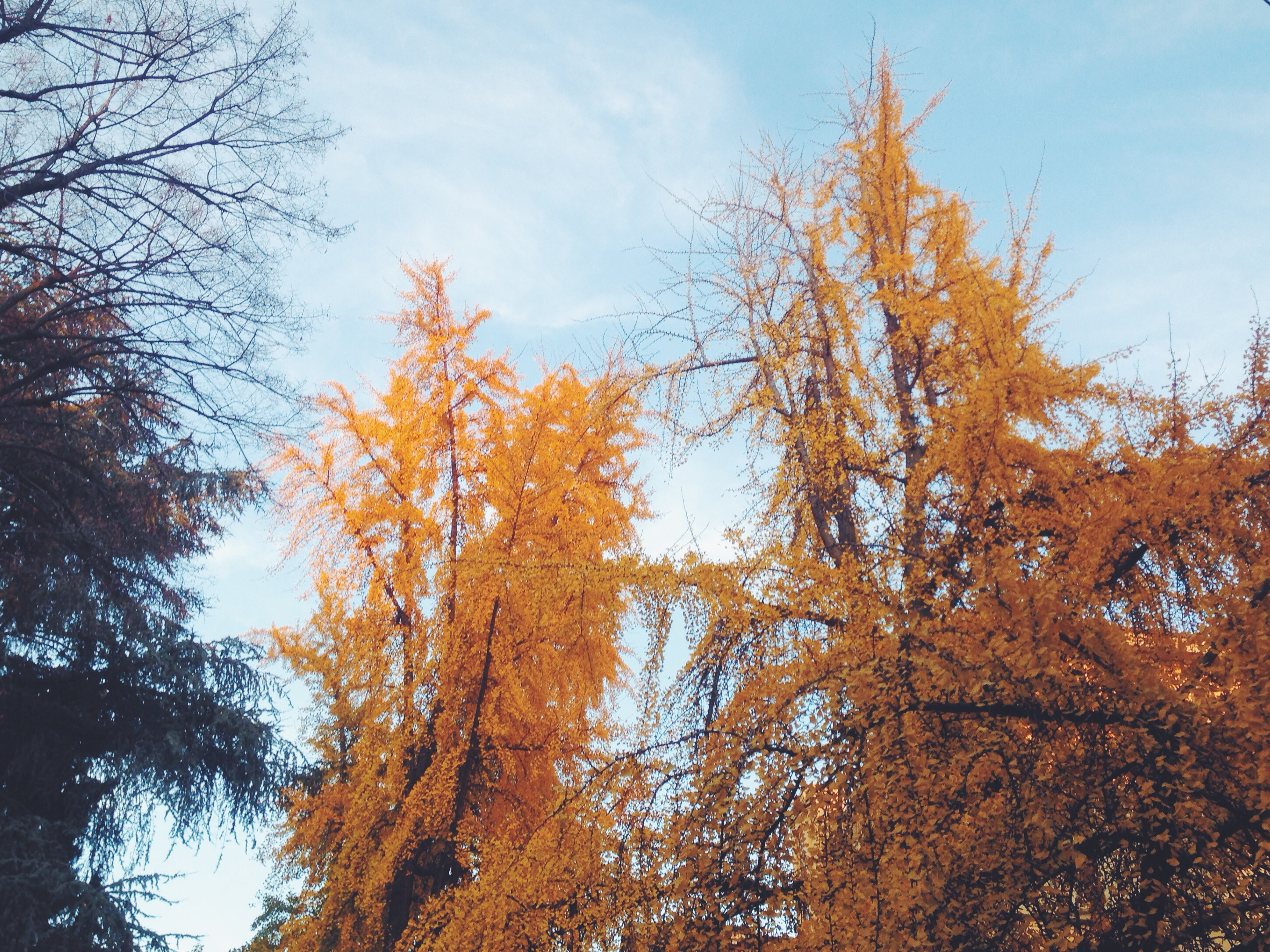 I colori dell'autunno bolognese