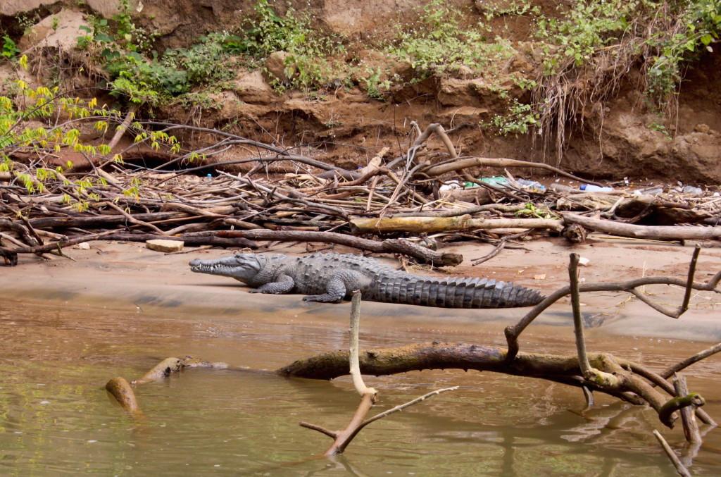 Itinerario di due settimane in Messico - Canon del Sumidero coccodrillo