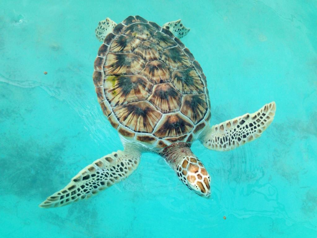 Itinerario di due settimane in Messico - Isla Mujeres tartarughe