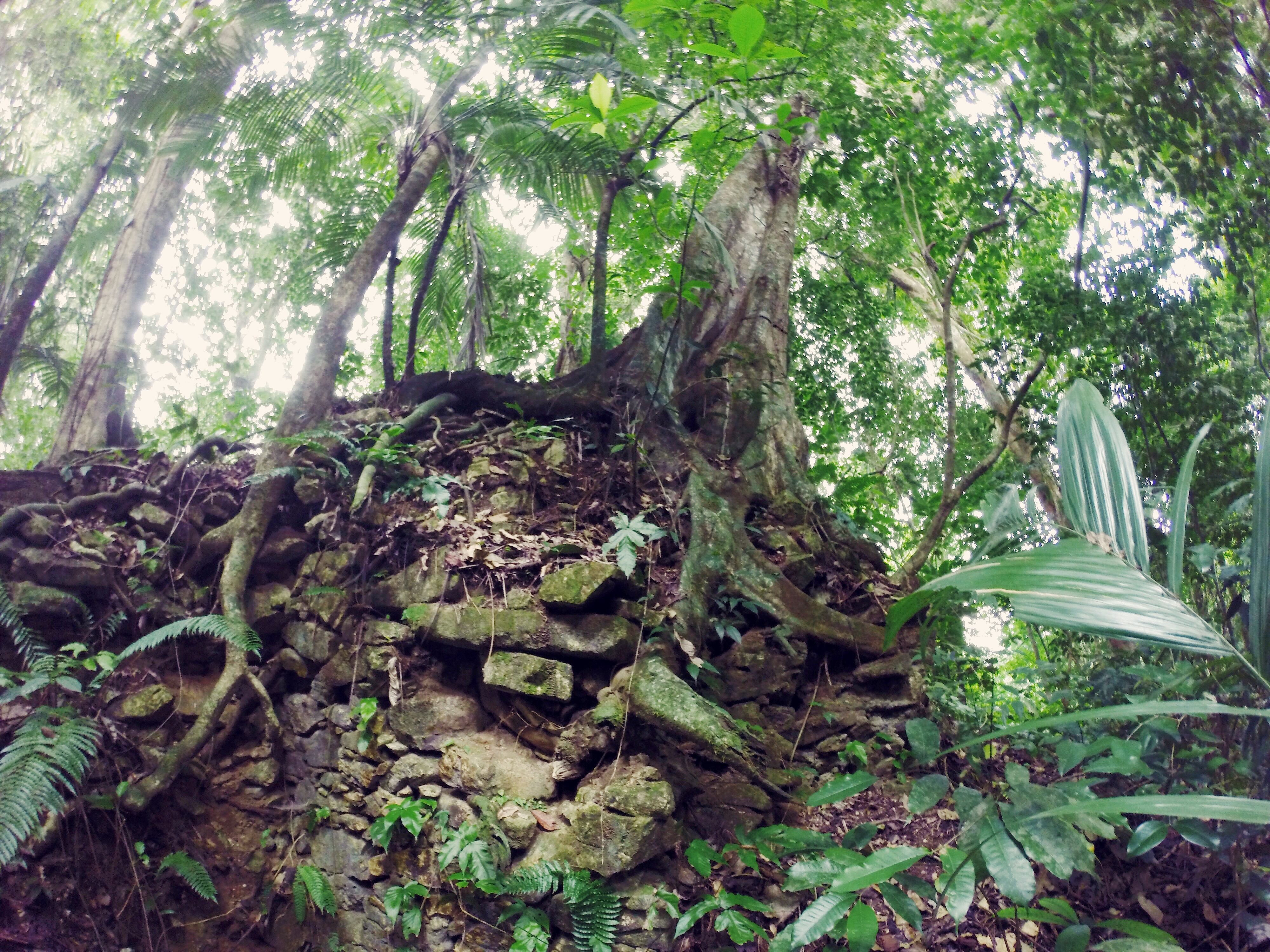 palenque sotto la giungla