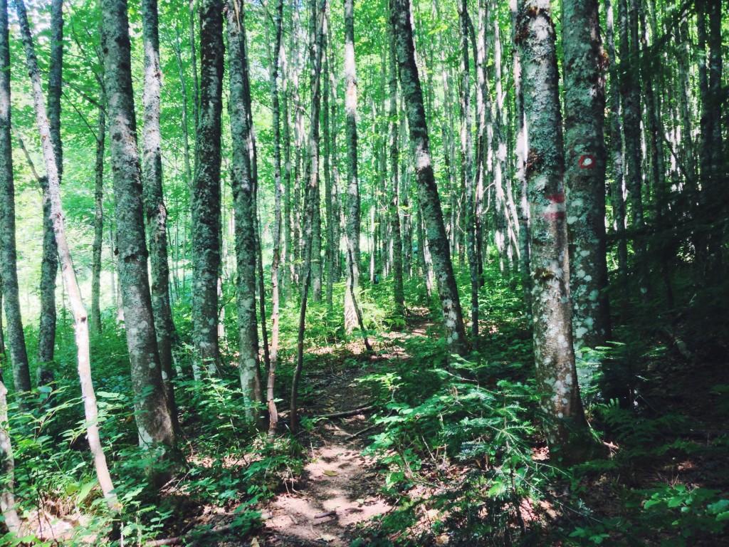 Foresta pluviale bosnia