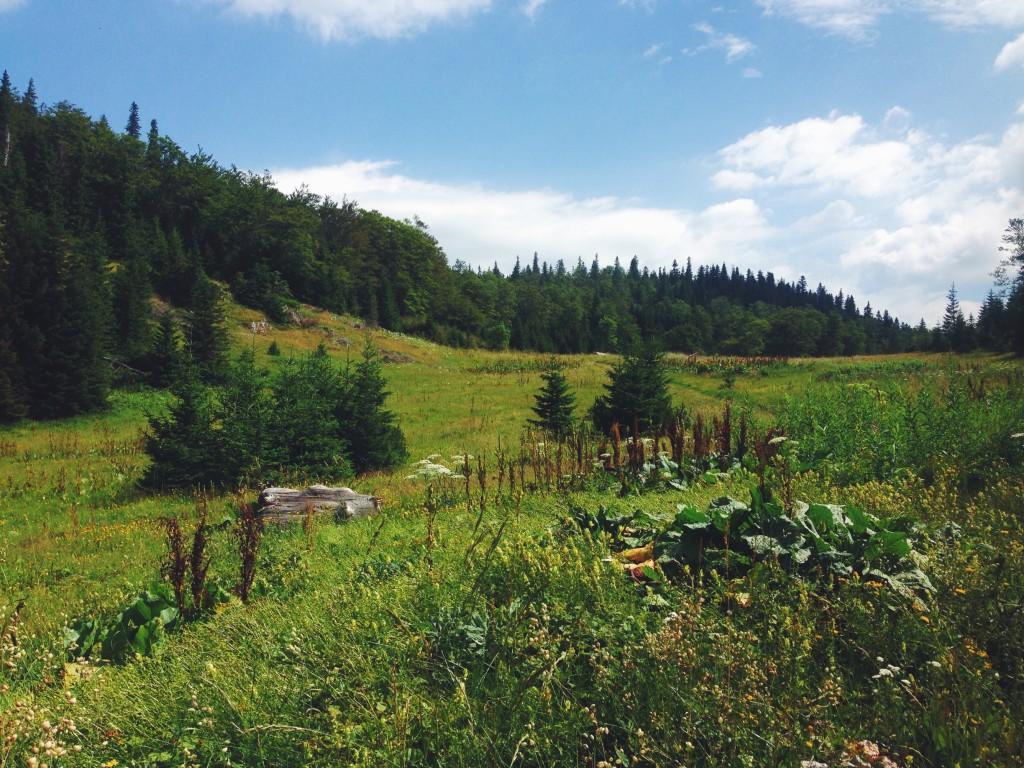Foreste in Bosnia