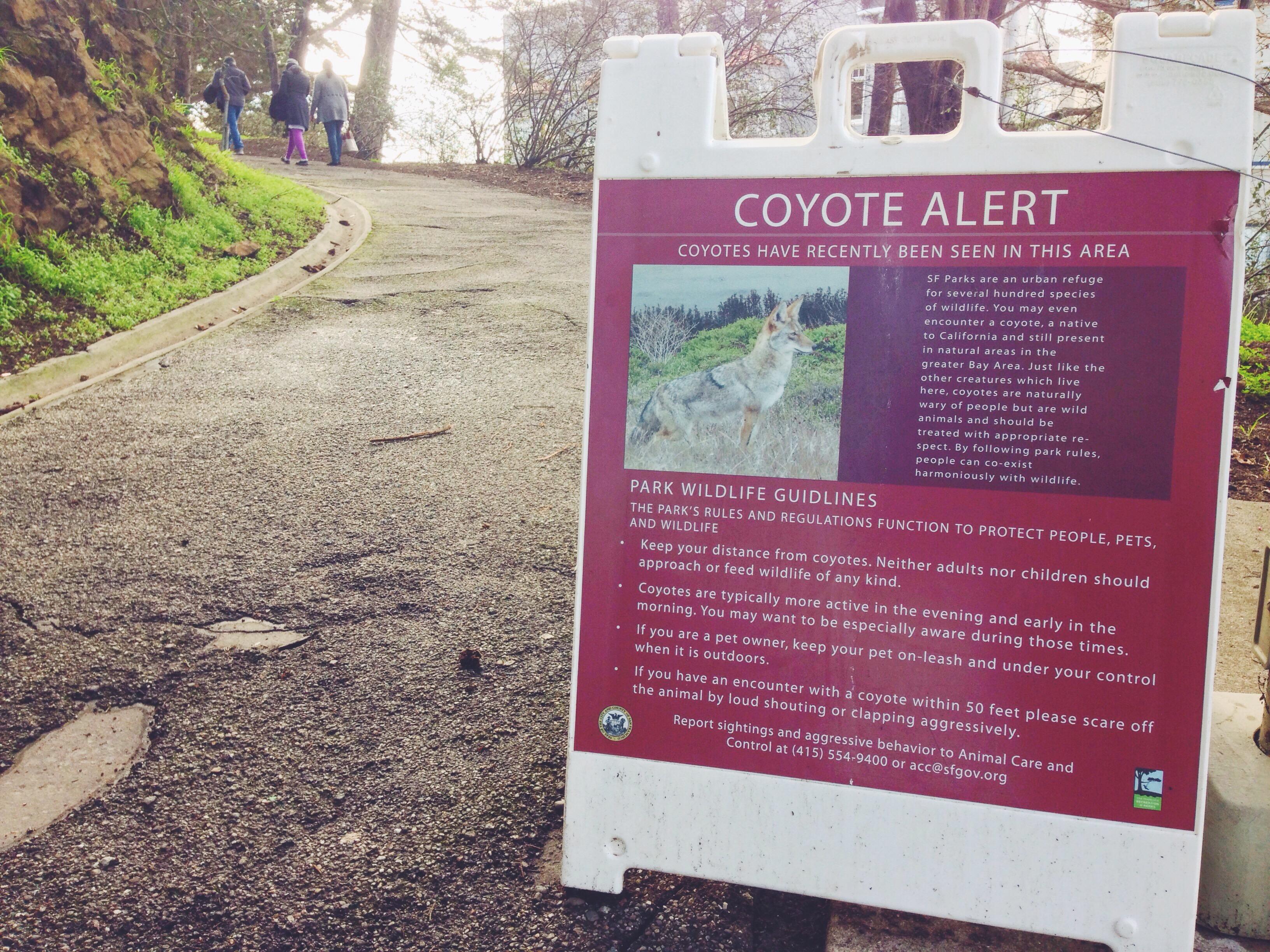 I coyote al Pioneer Park di San Francisco
