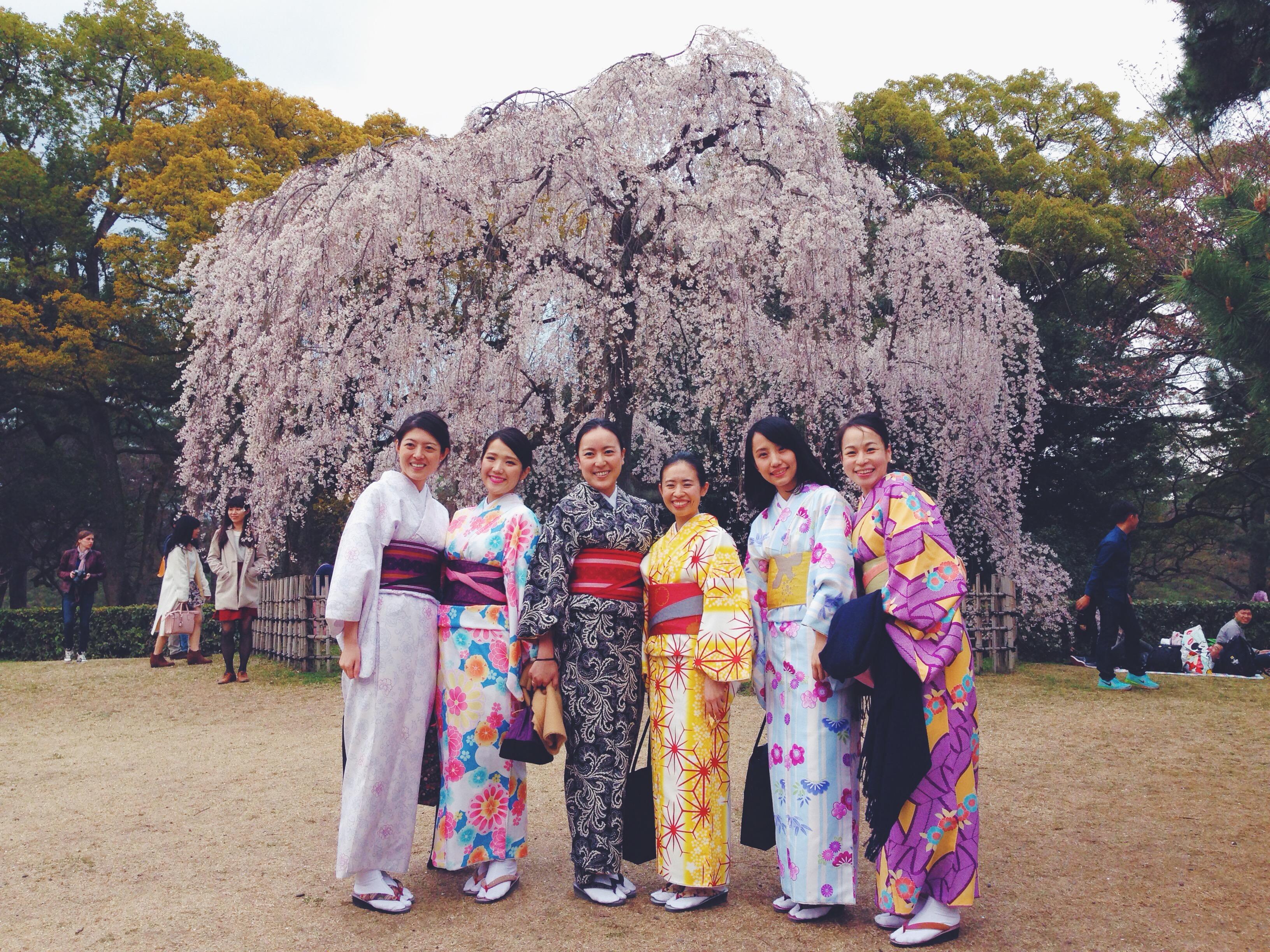 Ciliegi in fiore e ragazze in kimono in Giappone