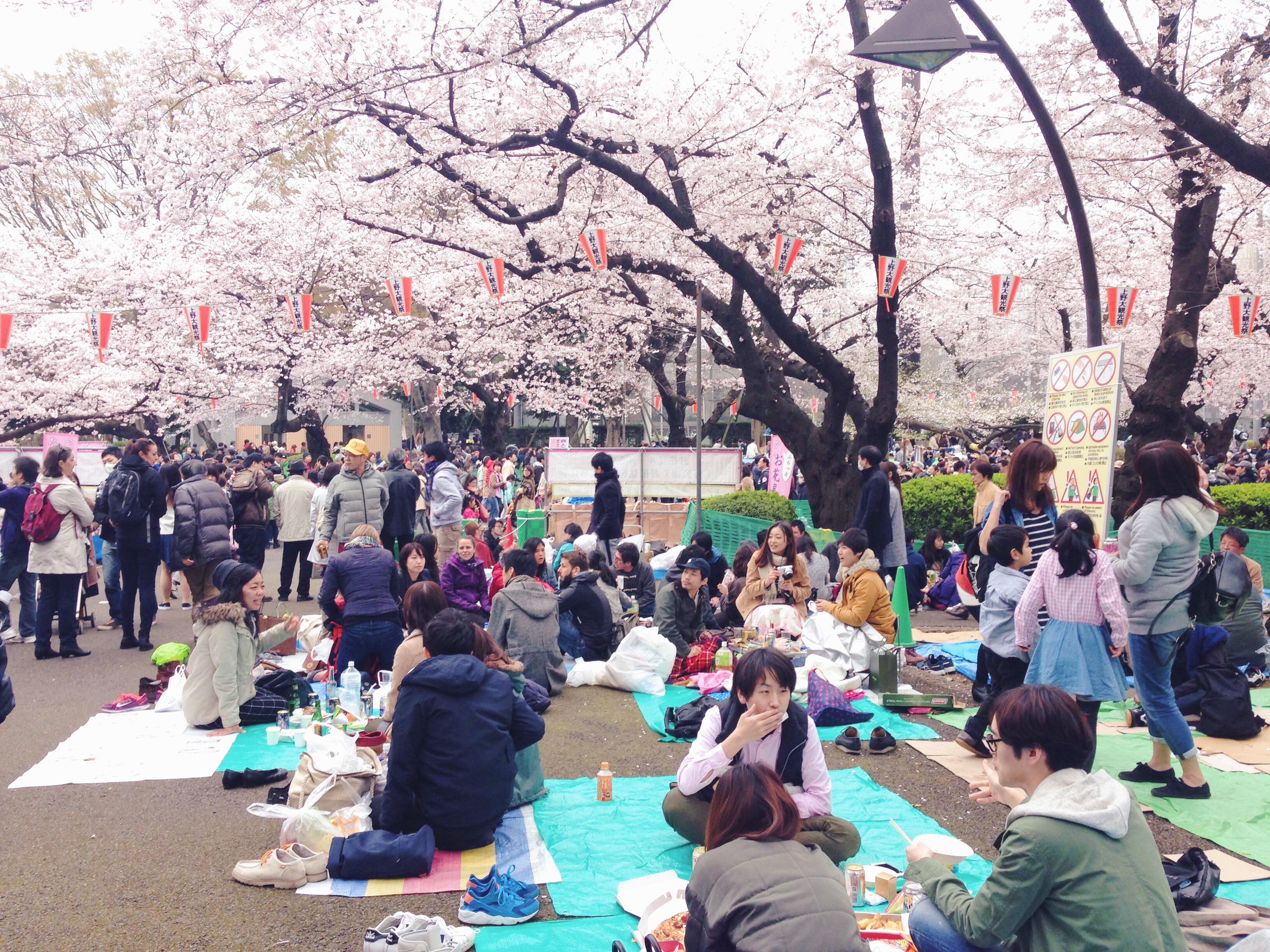 Hanami sotto i ciliegi al Parco di Ueno a Tokyo in Giappone
