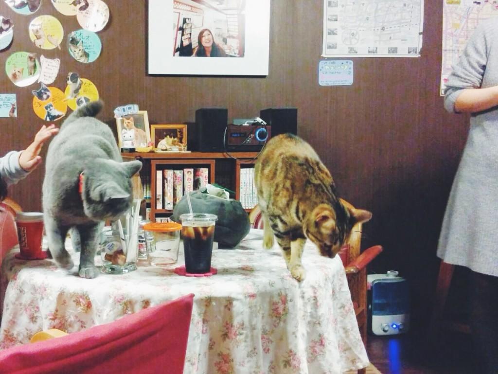 Neko cafè, un caffè con i gatti in Giappone a Tokyo