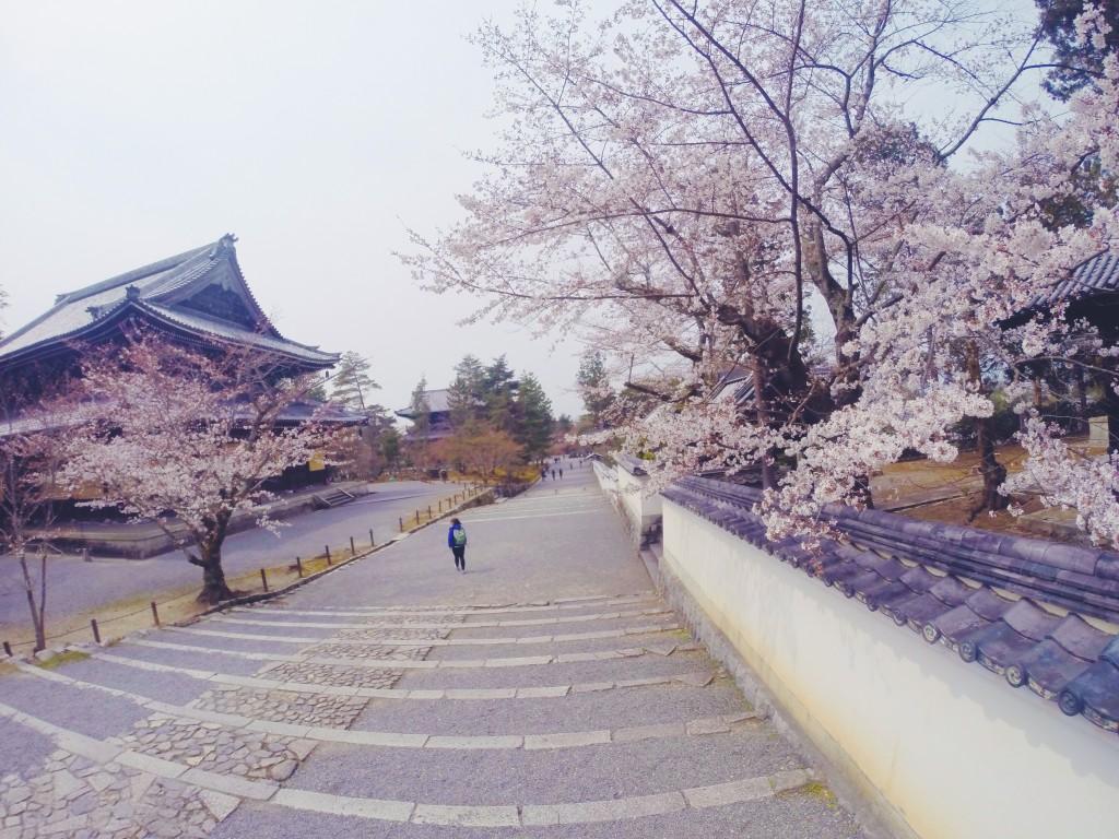 Tempio con ciliegi in fiore a Kyoto in Giappone