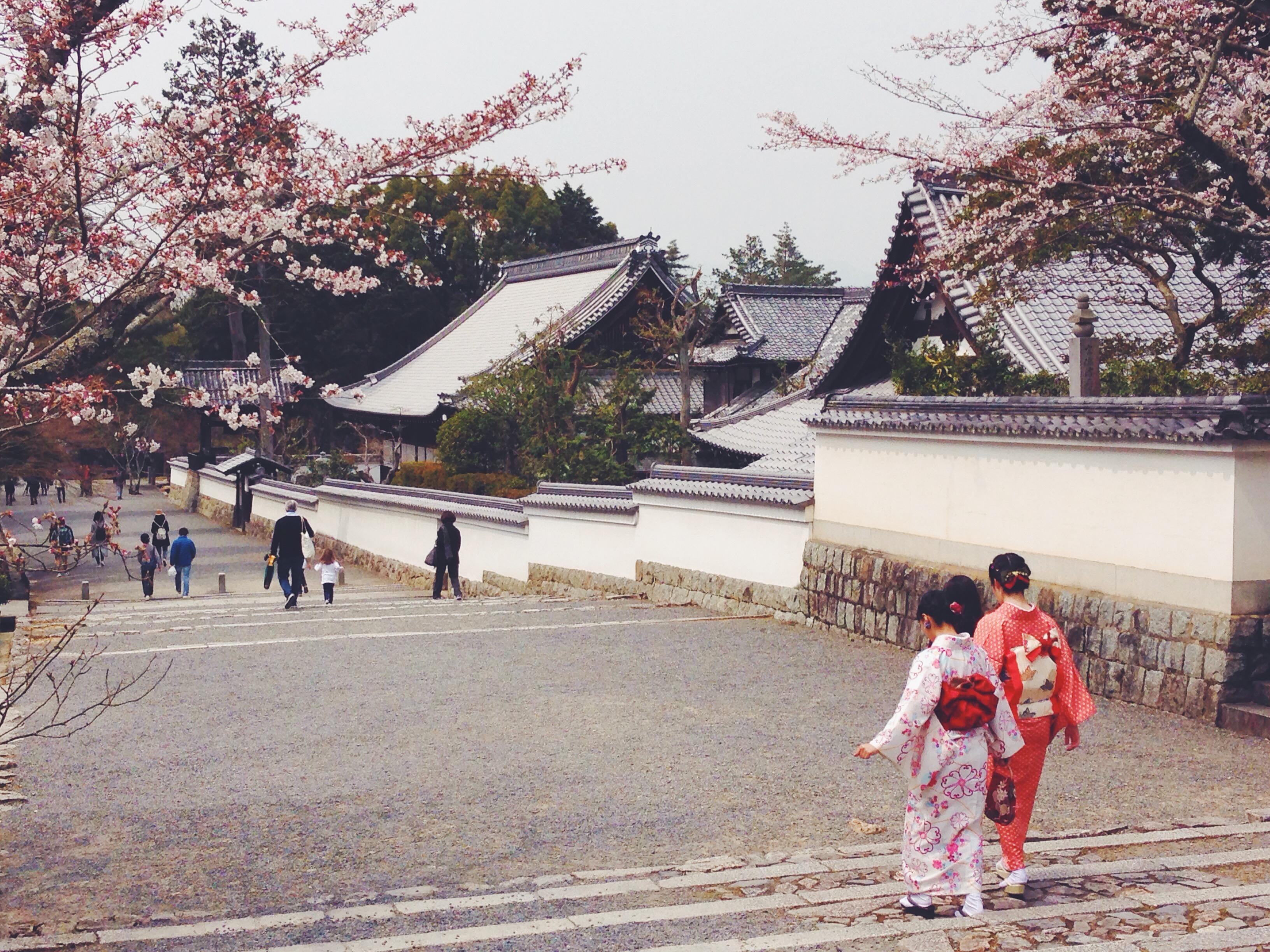 Tempio con sakura e ragazze in kimono in Giappone a Kyoto