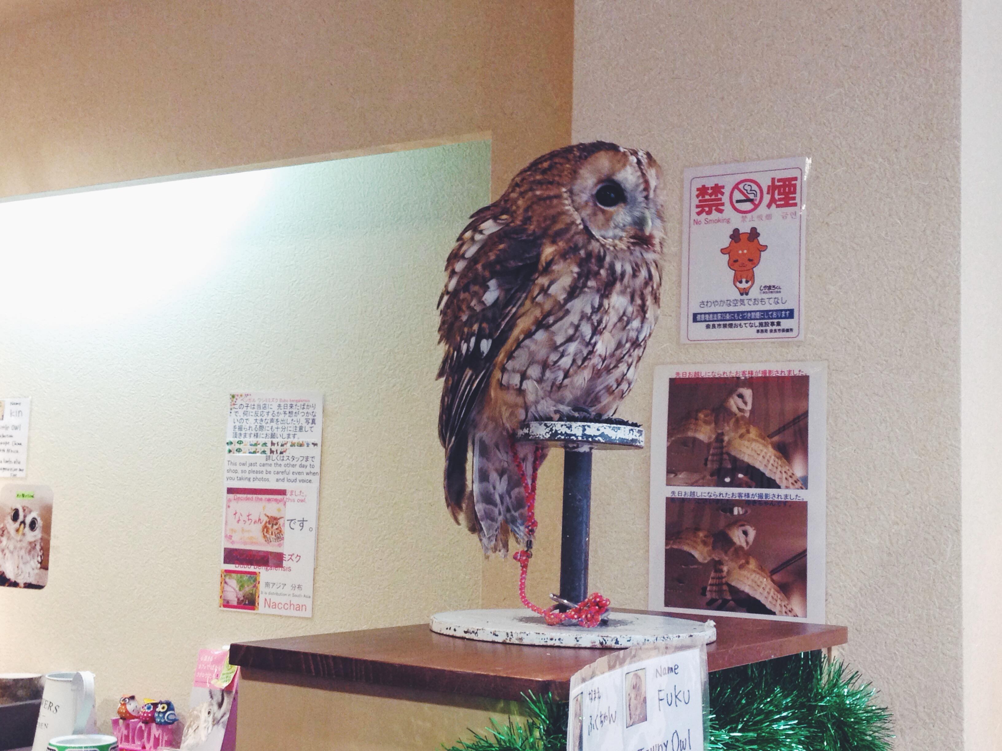 L'owl cafè di Nara