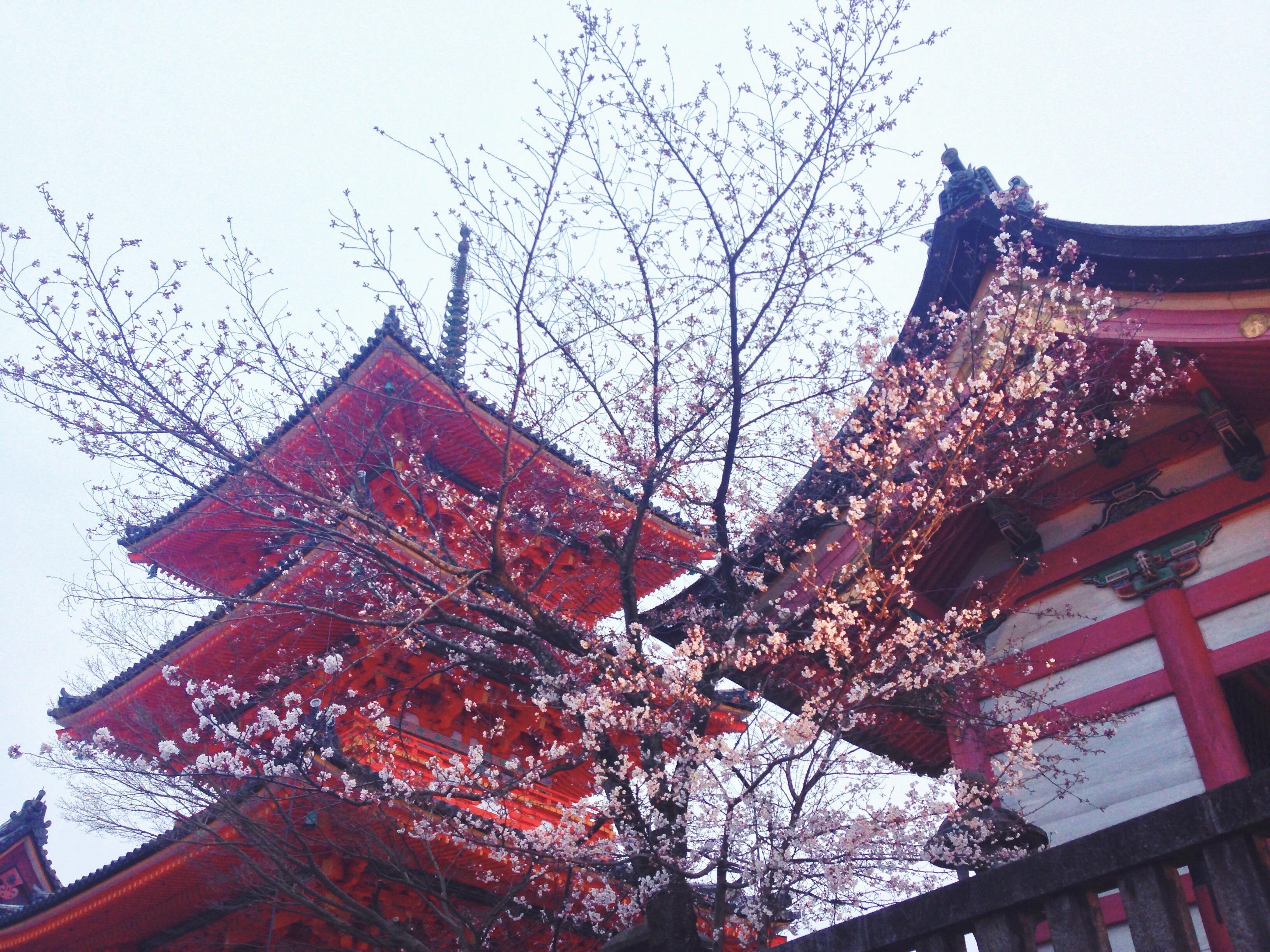 Il Tempio Kiyomizu-dera