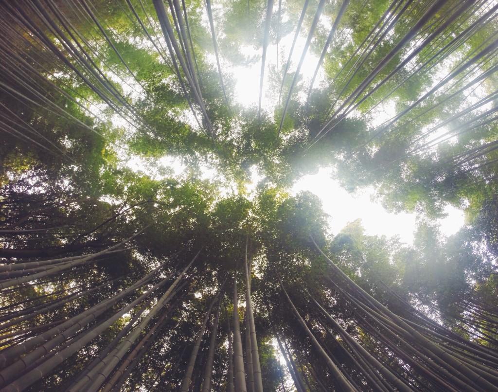 foresta di bambù di Arashiyama dall'alto
