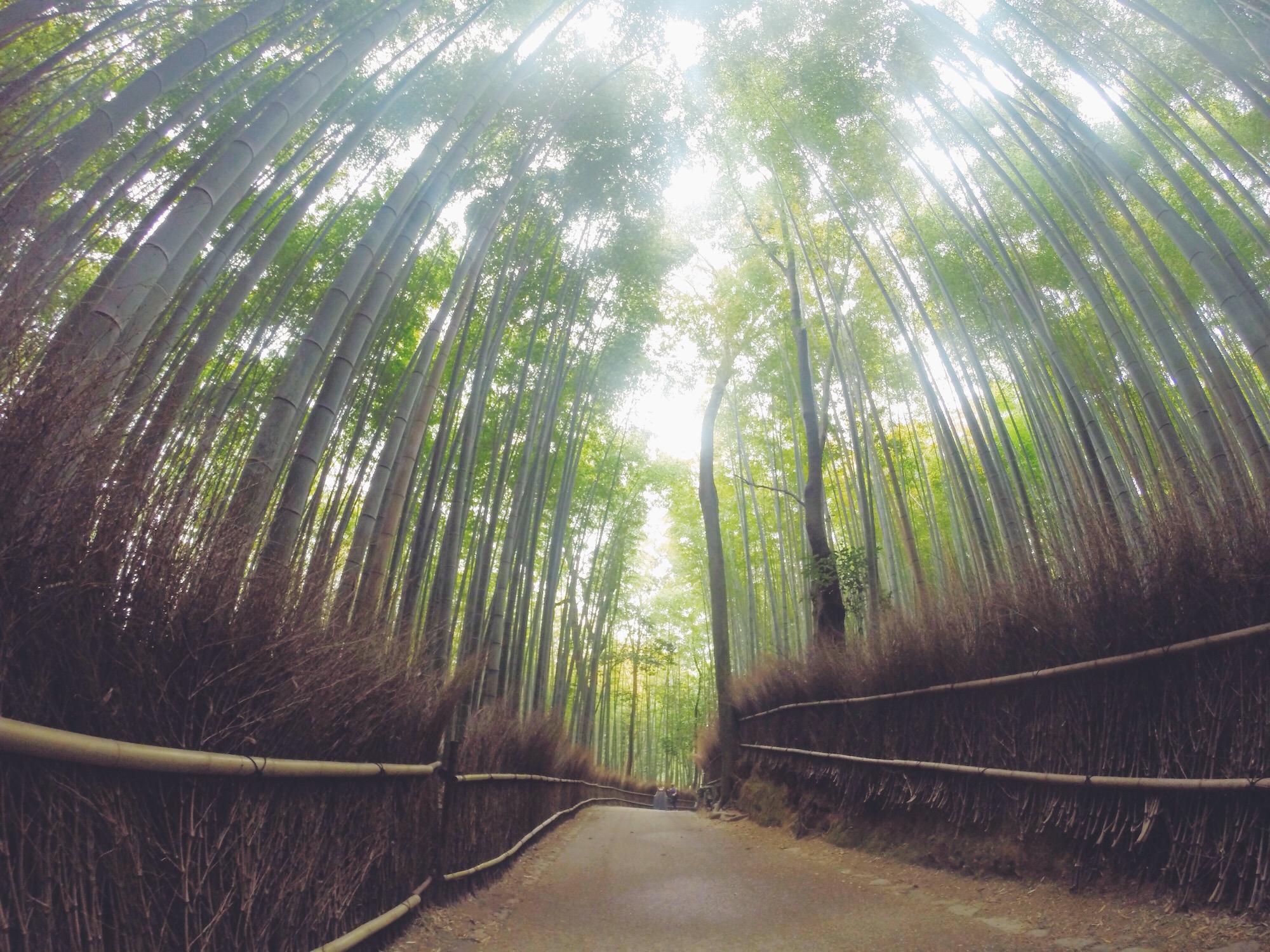 La Foresta di bambù di Arashiyama (anche con la Gopro)