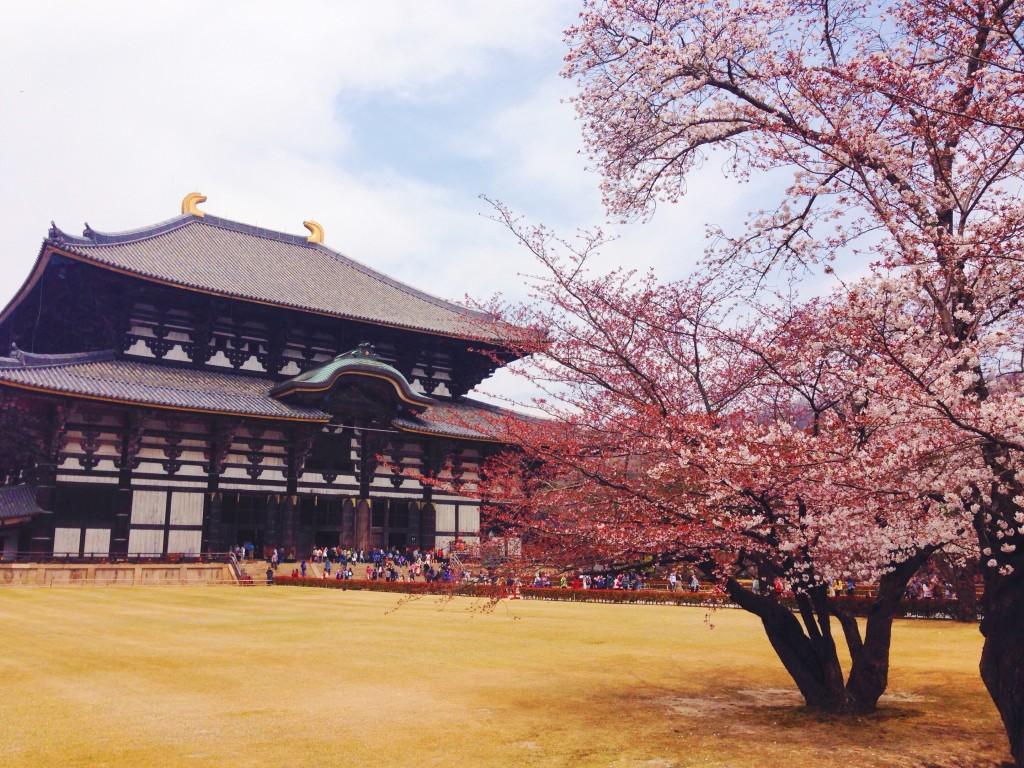il Tempio Todai-ji