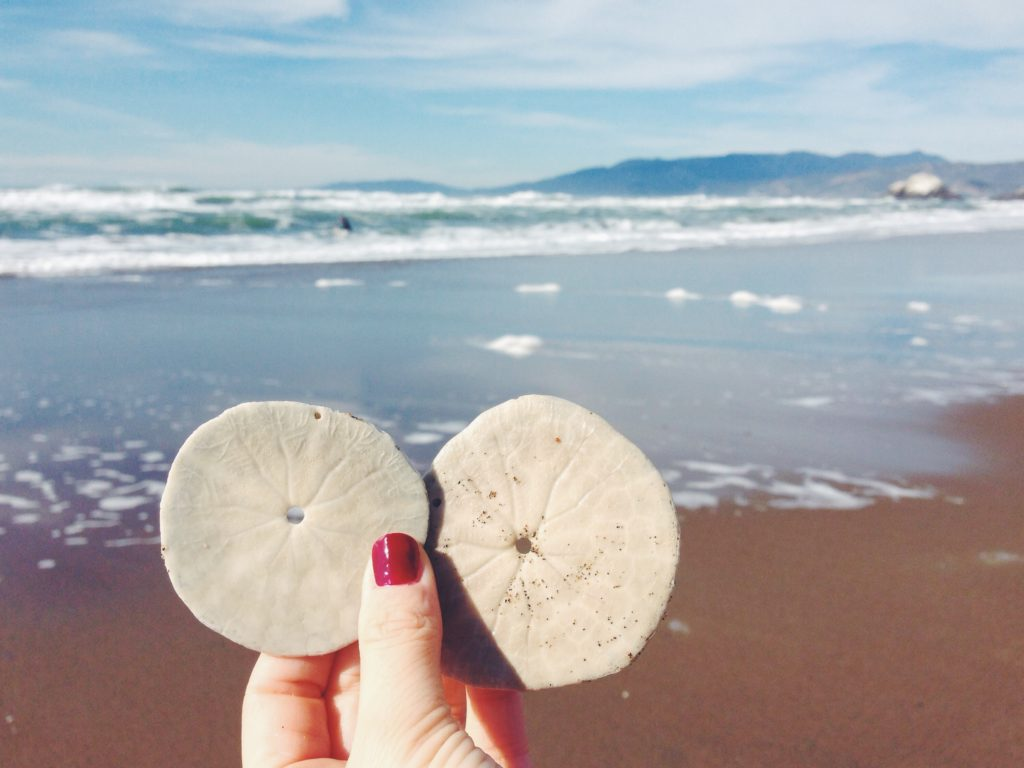 I sand dollar, le conchiglie di Ocean Beach