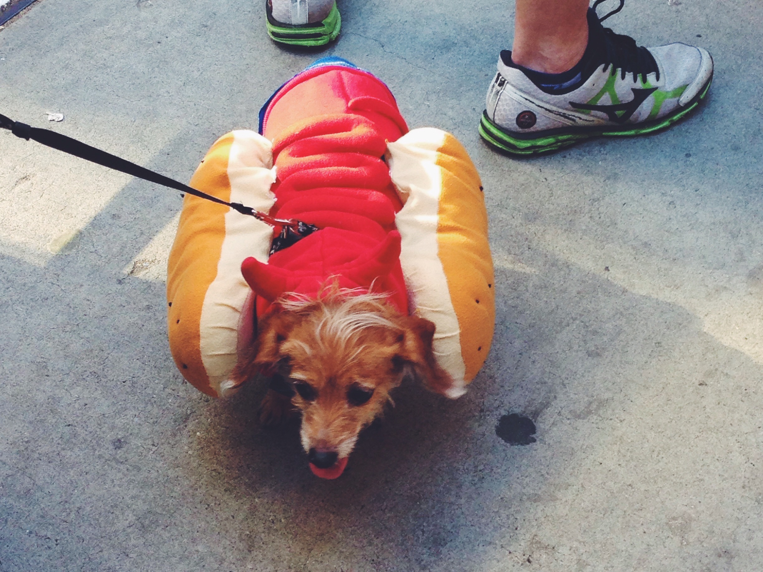 Il vero hot-dog