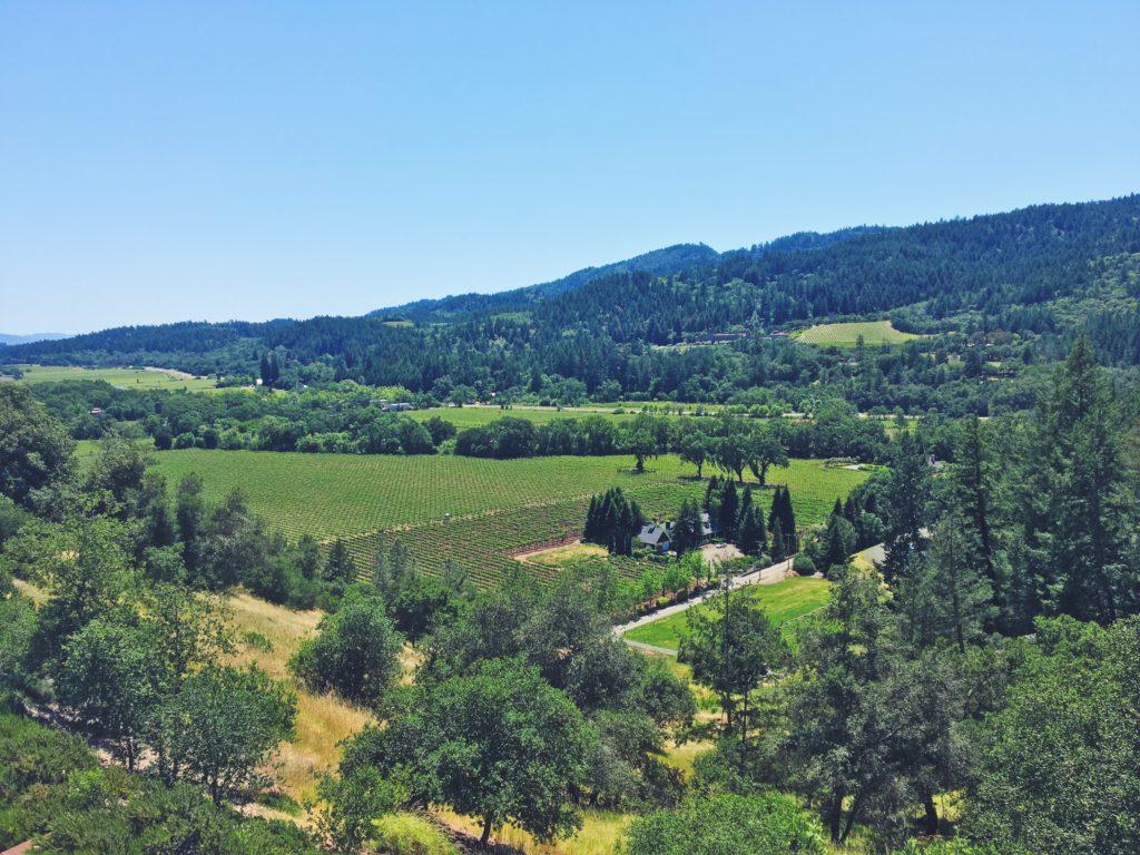 Il vino della Napa valley