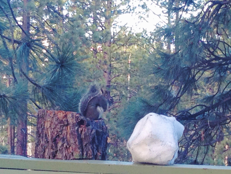 Lo scoiattolino fuori dalla nostra finestra