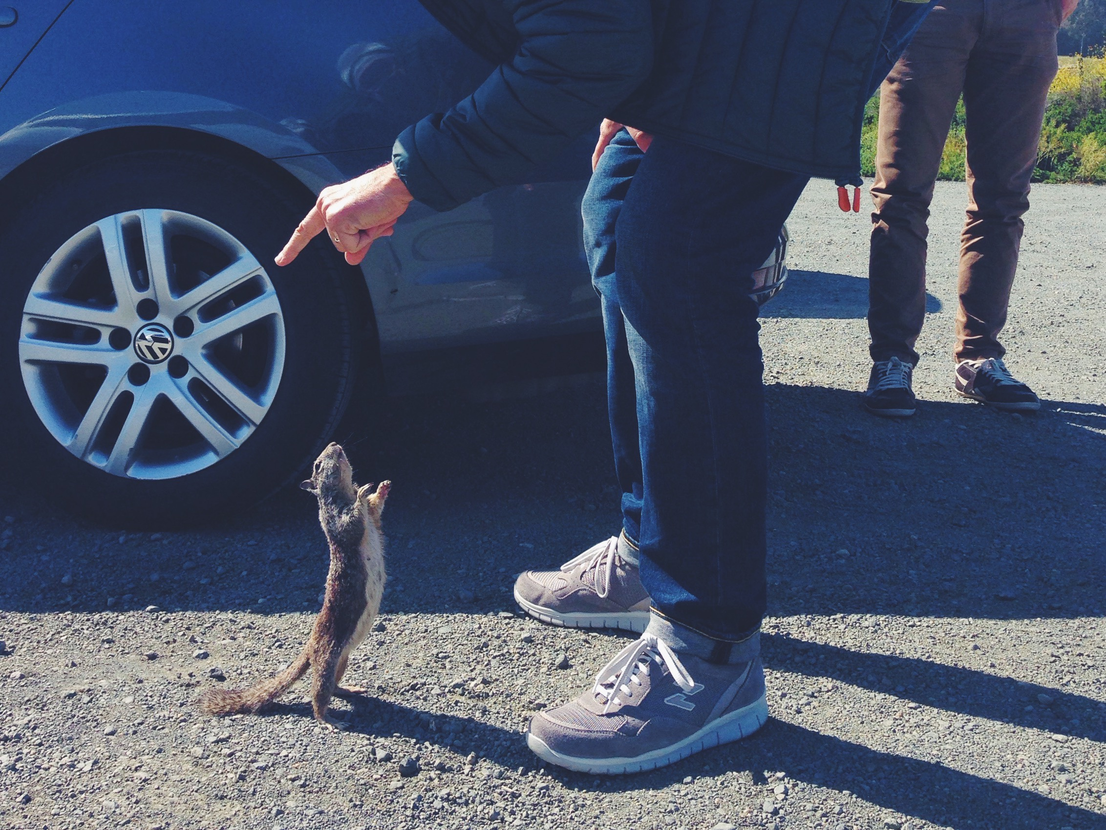 gli incontri ravvicinati con gli scoiattoli più sfacciati del mondo