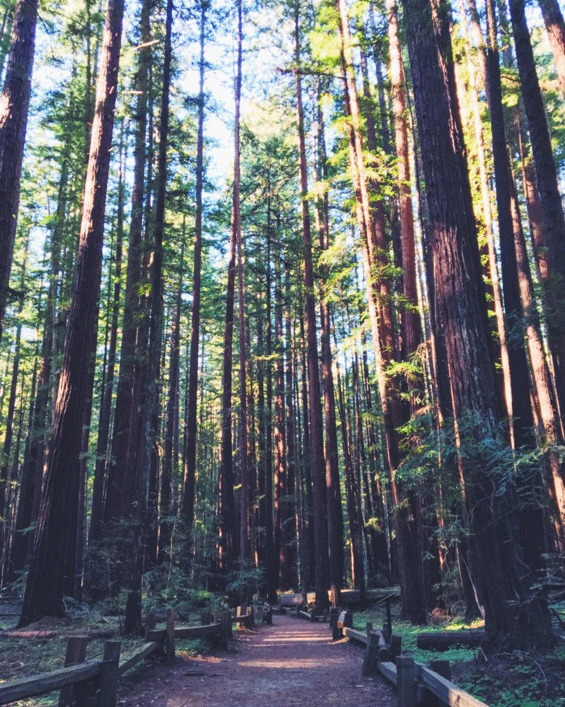 l'Armstrong Redwoods Reserve, Foresta di sequoie del nord della California