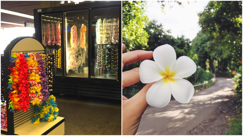 Hawaii americane vs autentiche