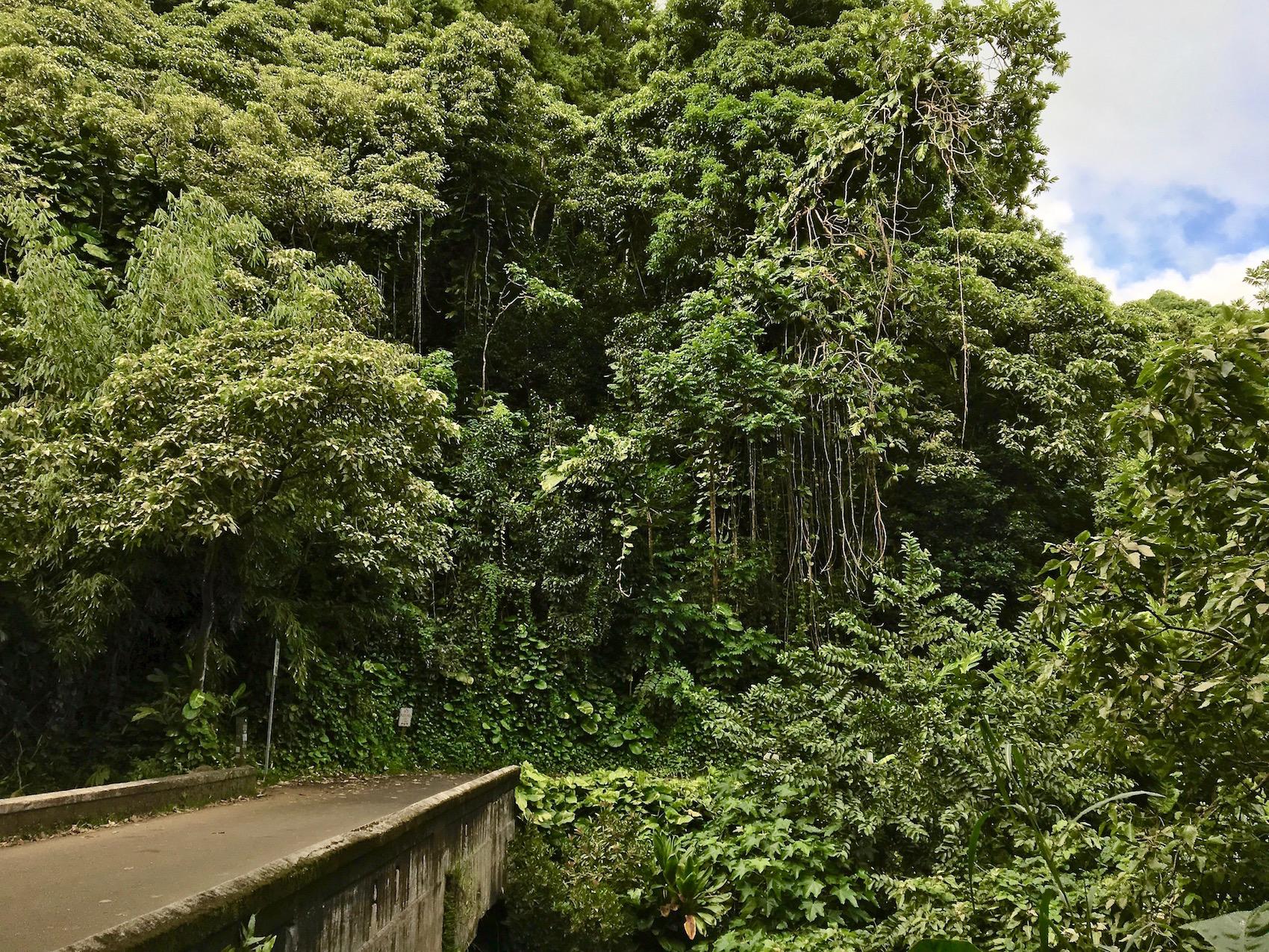 I ponti di pietra della Road to hana di Maui - Hawaii