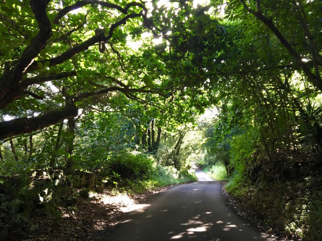 La strada più bella del mondo - Road to hana di Maui - Hawaii