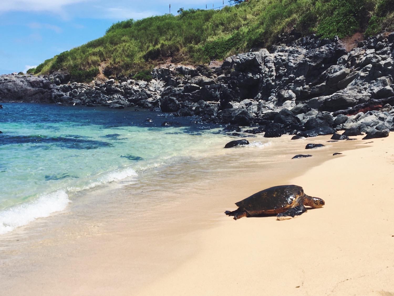 Spiaggia Hookipa Beach a Maui e le tartarughe che depongono le uova