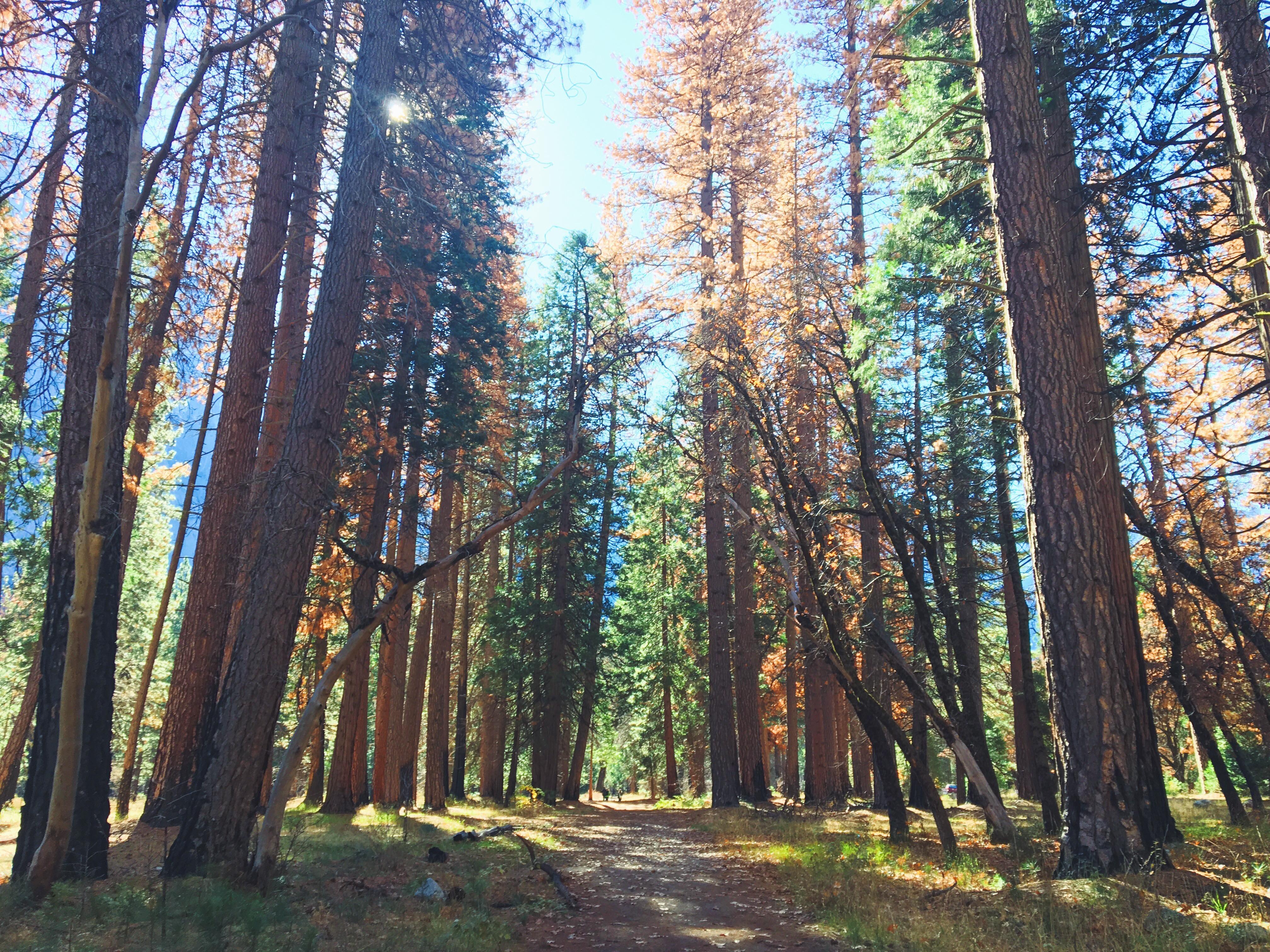 Foresta Yosemite National Park