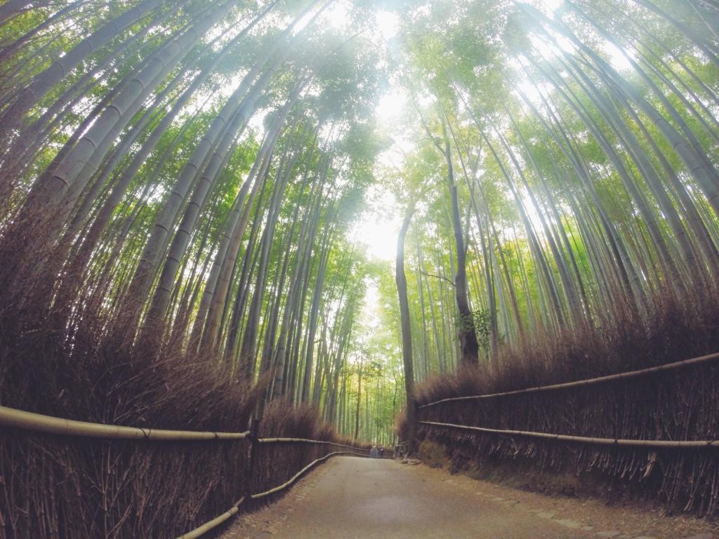 foresta-di-bambu-giappone