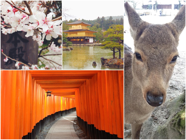 Organizzare un viaggio in Giappone