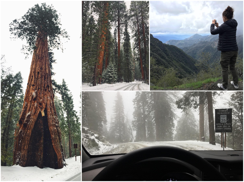 Cosa vedere al Sequoia National Park in un giorno