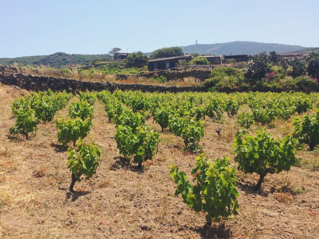 Contrada Kaffefi e le vignette pantesche - - Cosa vedere (e cosa assaggiare) in una settimana a Pantelleria