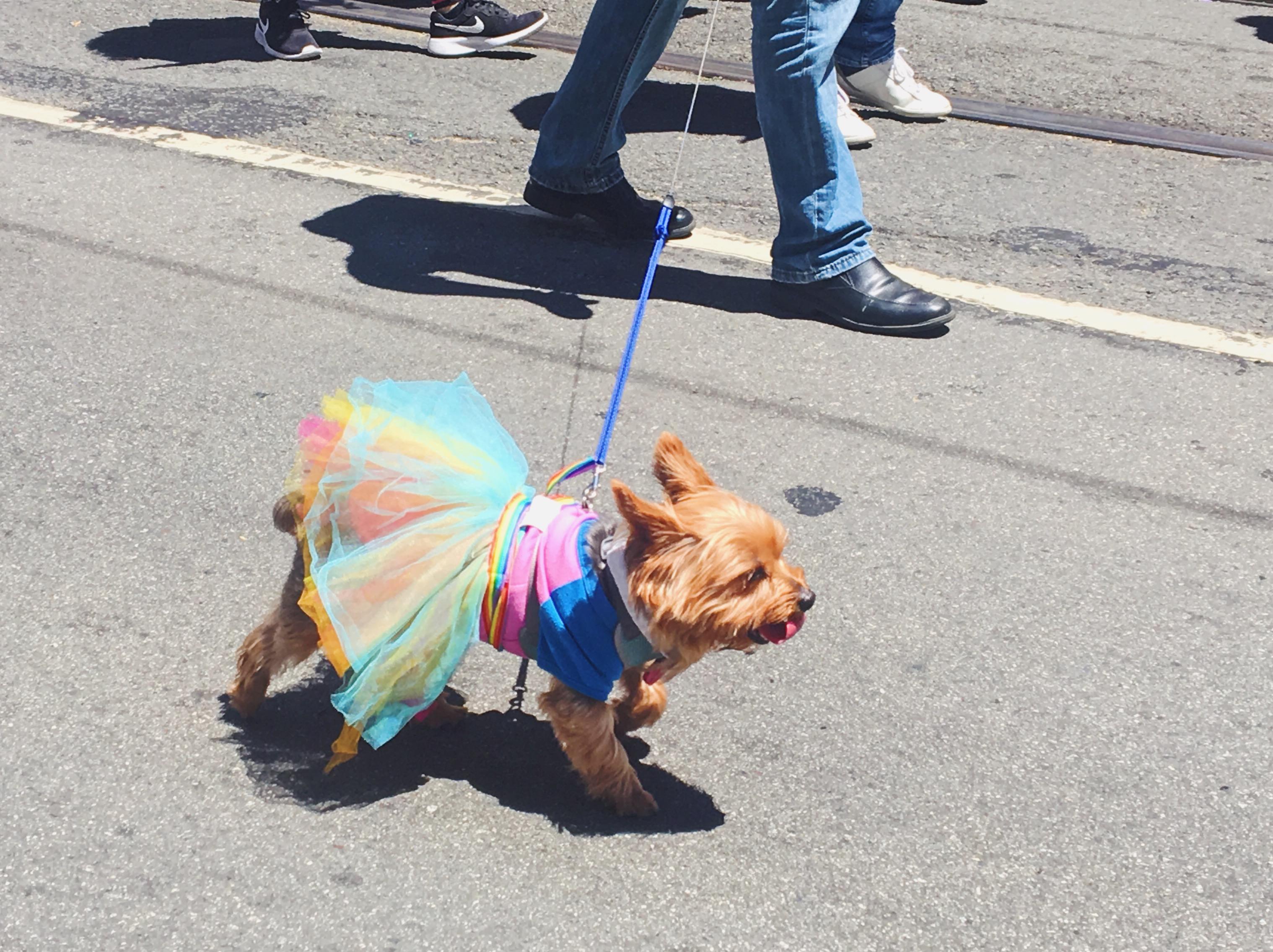 I cagnolini alla parata - L'evento migliore di San Francisco - la LGBTQ Pride Parade