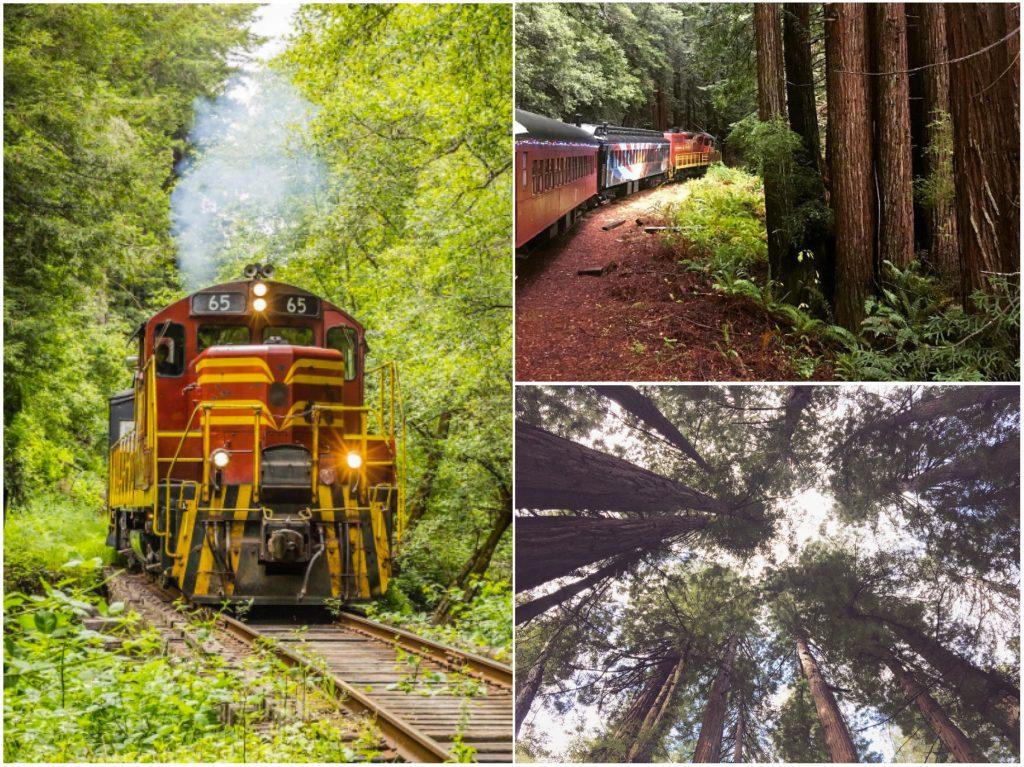 Lo Skunk Train - il treno antico che attraversa la foresta di sequoie in California - Fort Bragg - Mendocino