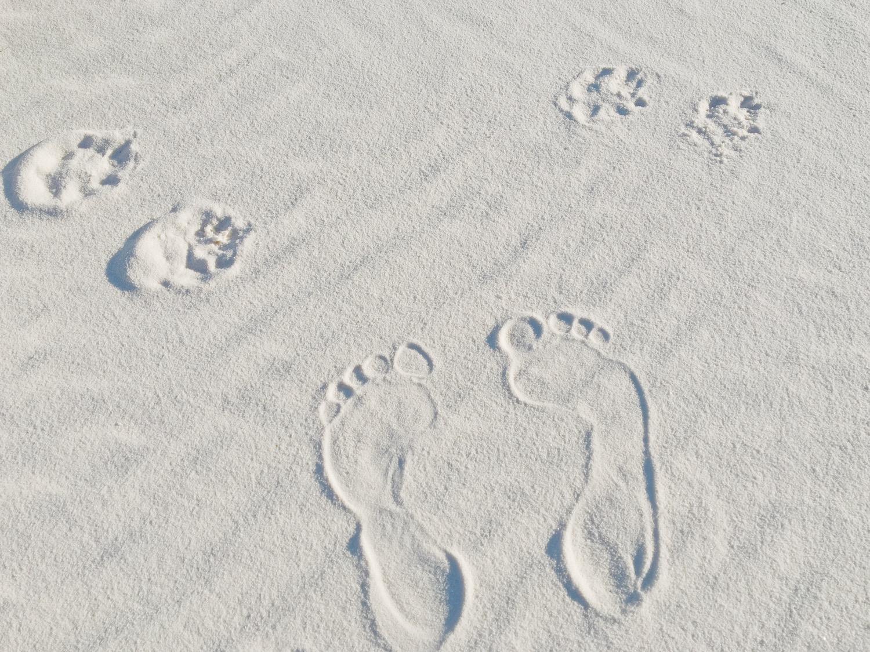 White Sands deserto di sabbia bianca - New Mexico - Cosa vedere