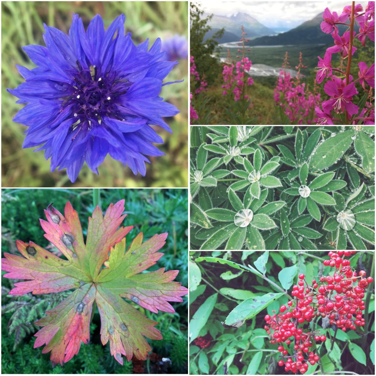 Natura in Alaska - Itinerario di 10 giorni in Alaska - penisola del Kenai