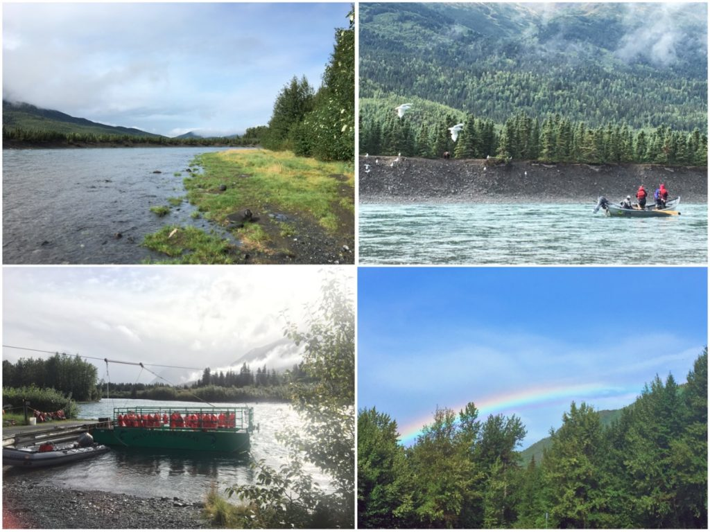 Russian River per vedere orsi e salmoni - Itinerario di 10 giorni in Alaska - penisola del Kenai